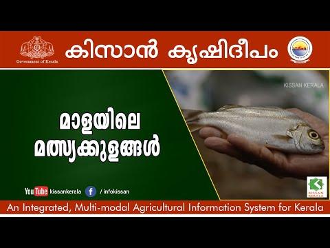 Story Of Govt. Fish Farm, Mala, Thrissur