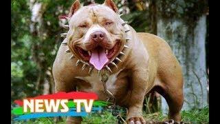 18 giống chó hขng dữ và nguy hiểm nhất thế giới