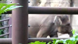 elephant saxophone