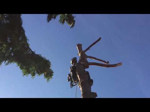 Baum Fachmännisch Abtragen