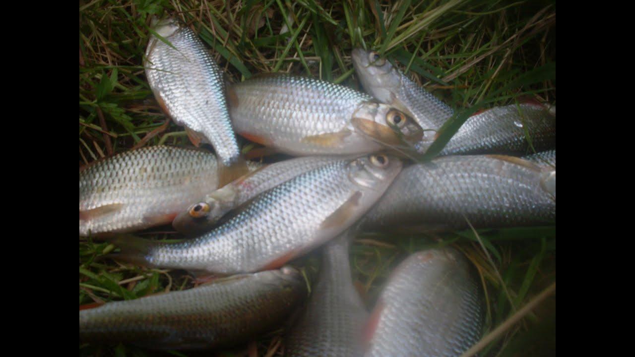 Comment pecher un poisson - Quand tailler un pecher ...