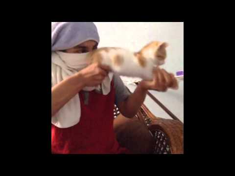 Thumbnail: New funny cats Vines Compilation part 1