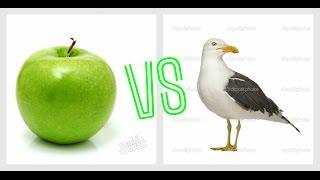 Прикол.Чайка ест яблоко/Funny video)