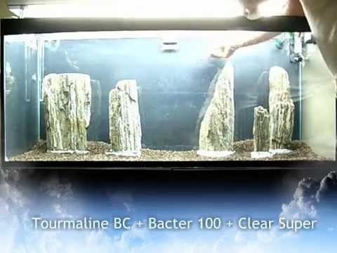 Allestimento Acquario Zen Aquarium Setup - Aquascape