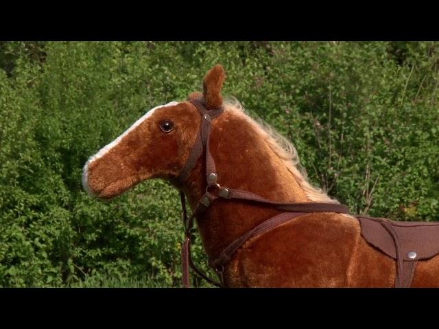 Pferde stehlen mit Assistenz24