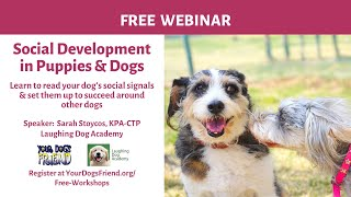 Social Development in Puppies & Dogs  7/25/20