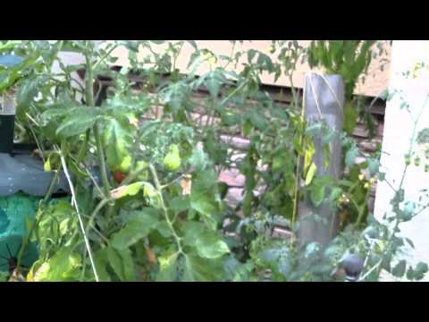 Natashia's Garden Part 1 - July 07, 2012