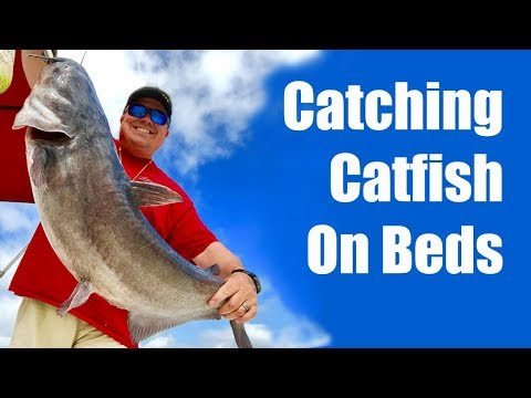 How To Catch Spawning Catfish - How To Catch Catfish On Beds - Where Do Catfish Spawn