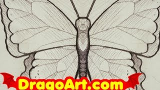 How to Draw a Butterfly, Draw a Butterfly in Pencil, Step by Step, (With Commentary)
