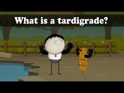 What is a tardigrade? | Smart Learning for All