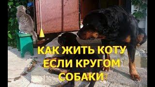КАК ЖИТЬ КОТУ,КОГДА КРУГОМ СОБАКИ?воспитание и дрессировка собаки