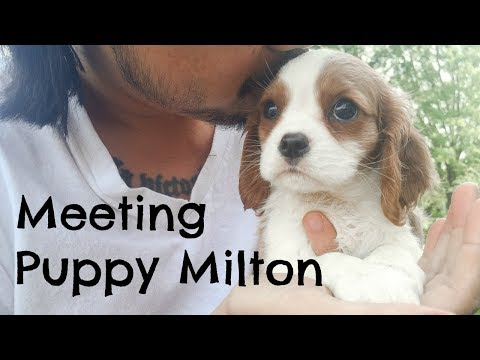 MEETING PUPPY FOR THE FIRST TIME | Herky The Cavalier