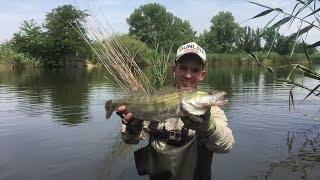 Забрели на СУДАКА !!! Рыбалка в Краснодаре