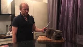Как приготовить рождественского кота