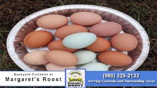 Backyard Chickens at Margaret's Roost - Poultry Farm in Gastonia, NC