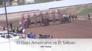 Repeat youtube video GATO AMERICANO VS TALIVAN