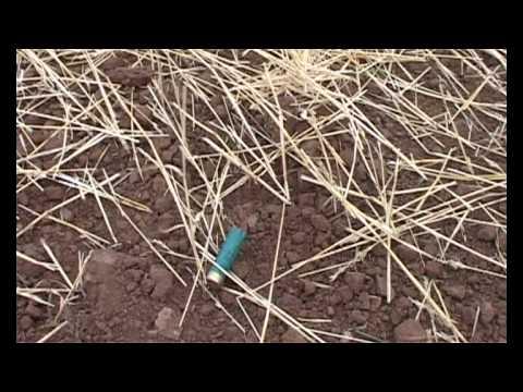 Чучела гусей и уток Аквазон.ру - YouTube