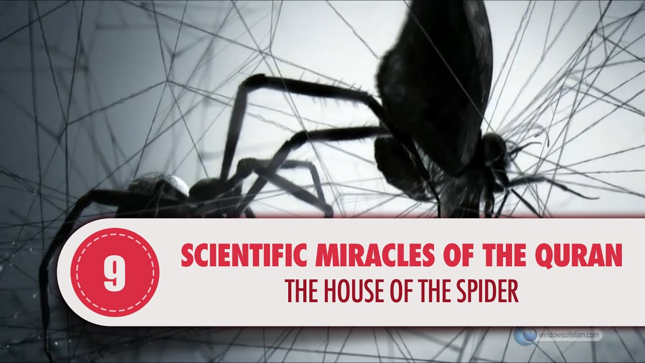 Scientific Miracles Of The Quran, 9   The House Of The Spider   YouTube