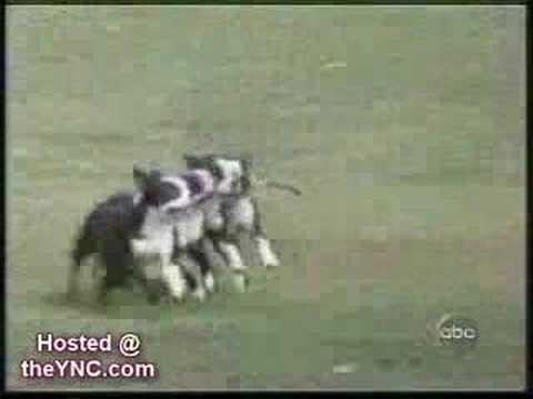 Dog Fun Fun