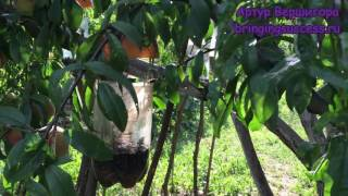 Как сделать ловушку для крылатых насекомых. Сад Дача Огород