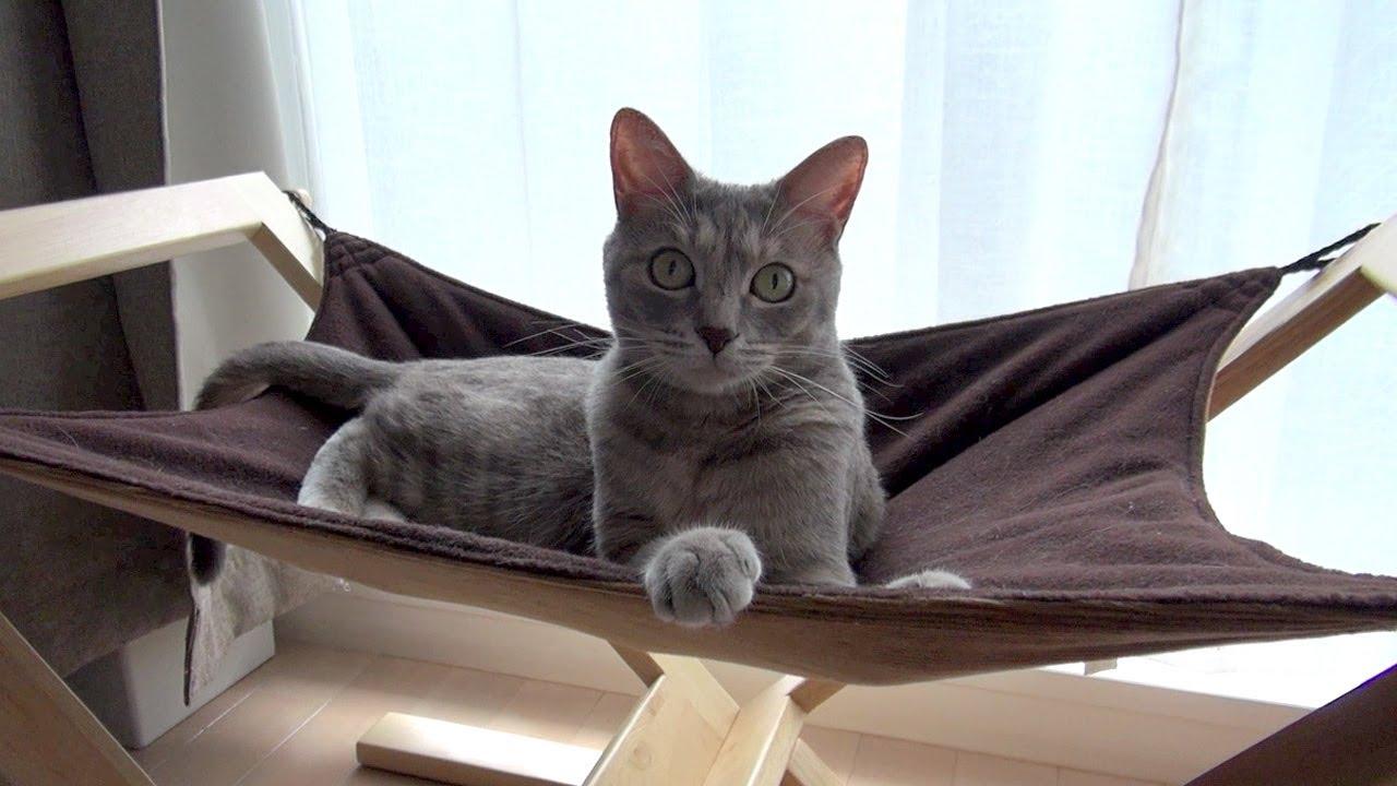 ハンモッカーズ - Cat Hammock -
