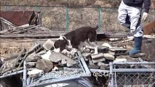 昨年に引き続き、ラッキーくんの災害救助犬トレーニングの様子。 今年初...
