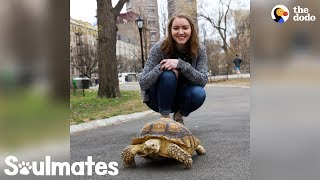 Girl Plans To Grow Old With Her Tortoise | The Dodo Soulmates