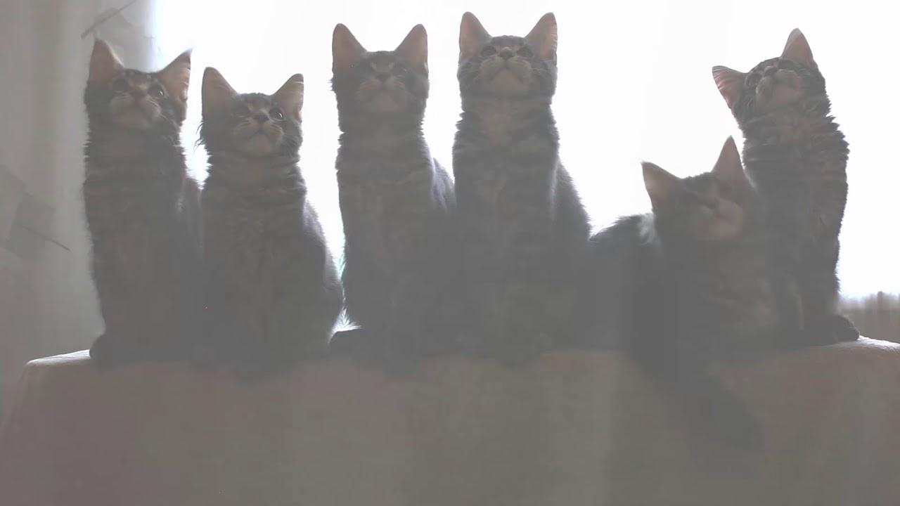 Ken Garff Nissan Riverdale GarffEase   Kittens