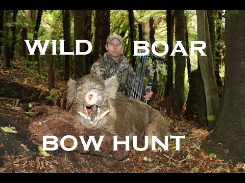 BOWHUNT WILD BOARS