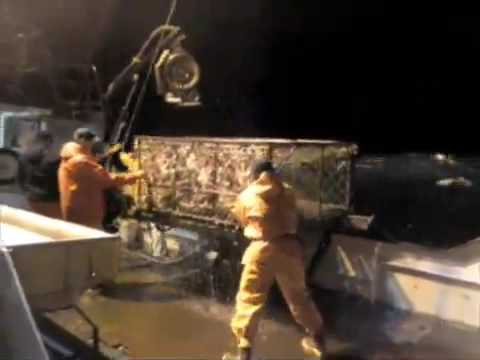 KIng Crabbing in the Bering Sea, work footage 2009