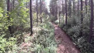 1103 ac of Hunting and Timber Land For Sale in Pender County, NC!