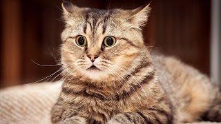 Cамые лучшие приколы с котами! 2017, Я УПИСАЛСЯ ОТ СМЕХА! (エロアニメ女子高生)