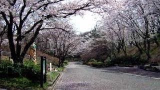 「桜雨~さくらあめ~」瀬川瑛子さんの曲です。2011年2月2日発売。 アル...