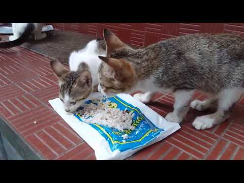 Cute Cats and Kittens Enjoying Food