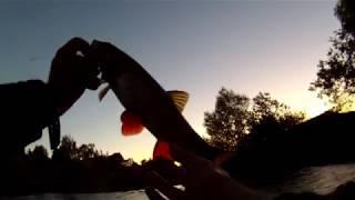 Такой ШИКАРНОЙ рыбалки на ГОЛАВЛЯ у меня небыло НИКОГДА!!!