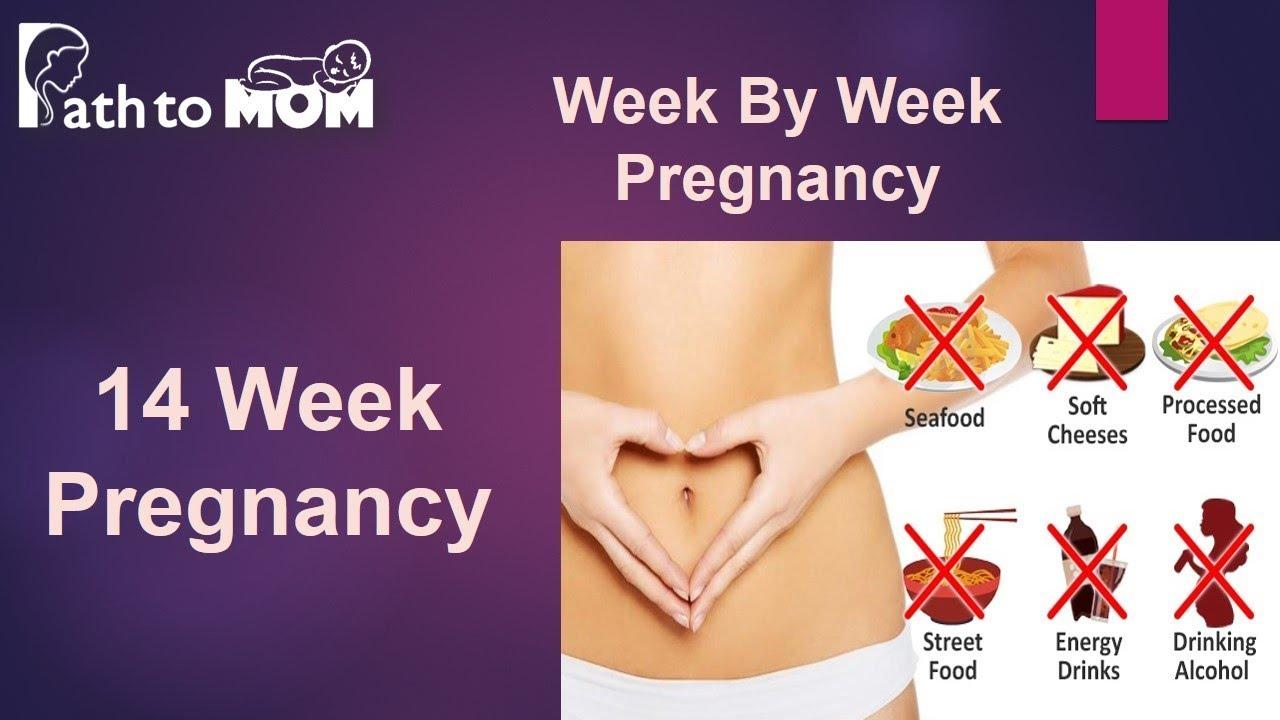 Pregnancy Week By Week | 14 Weeks Pregnant | Pregnancy ...