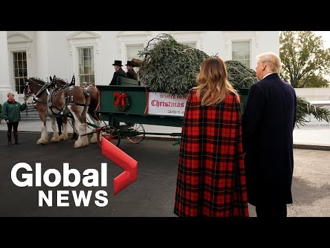 President Trump receives White House Christmas tree