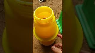 Hướng dẫn làm thuốc diệt cỏ từ ure và kali không độc hại