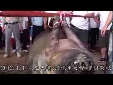 宗教民俗擁有虐待動物的特權嗎 ?