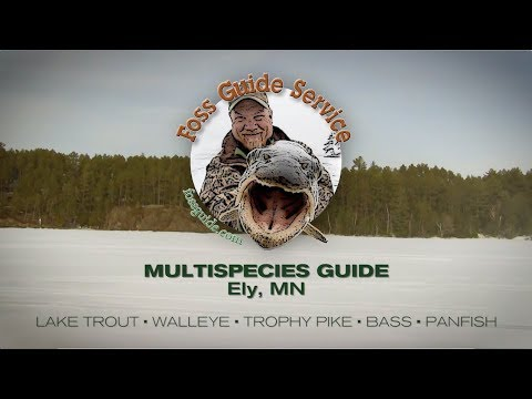 Foss Fishing Guide Service | Burntside Lake | Ely, MN | Lake Trout, Pike, Walleye, Bass, Bluegill