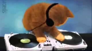 DJ.chicken is on the floor..