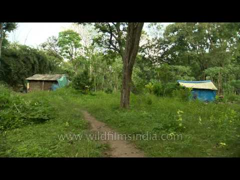Tribal village amidst forests of South India