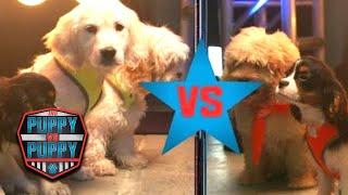 American Ninja Warrior: Puppy Vs. Puppy