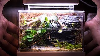 mini-complete-waterfall-paludarium