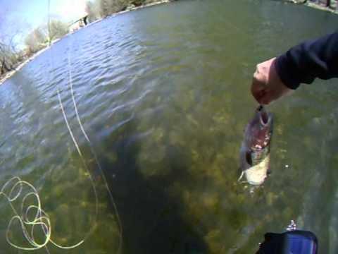 P che la mouche fly fishing ouitouche white fish for Otter creek fishing report
