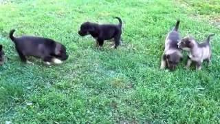 Прикольные и смешные маленькие собачки