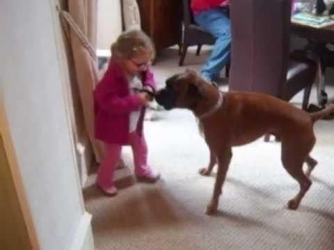 BOXER DOG AND TODDLER PLAYING