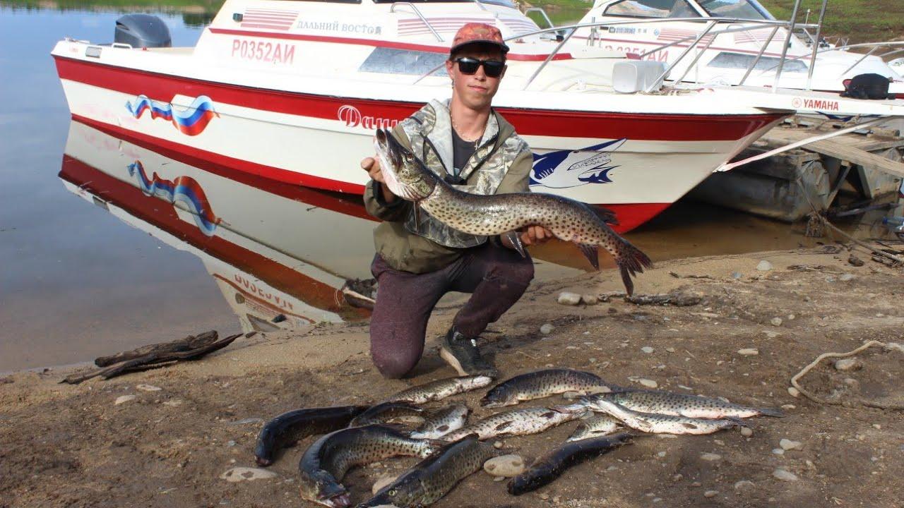 Фото рыбных трофеев на цнянском водохранилище