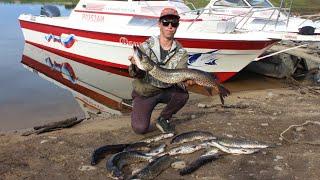 Поймали ТРОФЕЯ на бурейском водохранилище Рыбалка на бурейском водохранилище