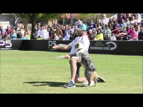 Freestyle Flying Disc Winner - 2016 Purina® Pro Plan® Incredible Dog Challenge® Eastern Regionals